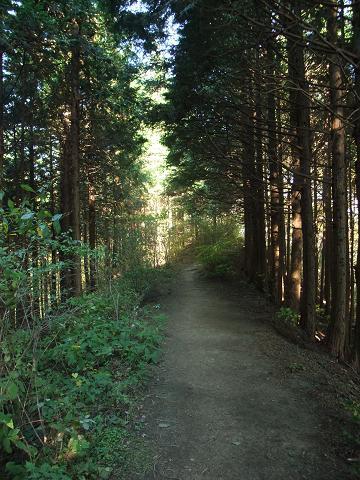 明るい道を歩きたいよ~