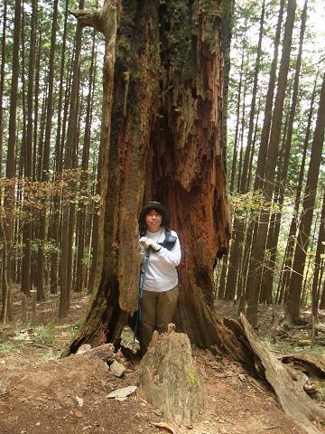 けっこうでかい木でした