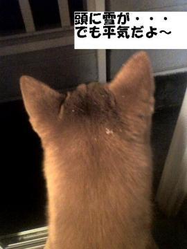 atamaniyuki.jpg