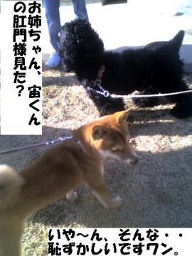 hazukasiiwan.jpg
