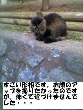 kowasugiruneko.jpg