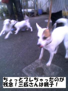 sanbikinooyako.jpg