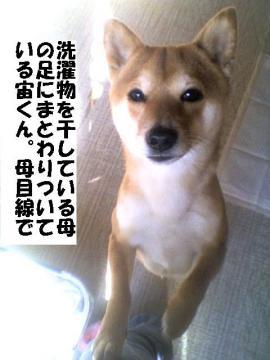 sentakuchu.jpg