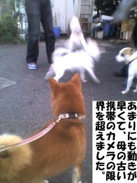 ugokigahayai.jpg