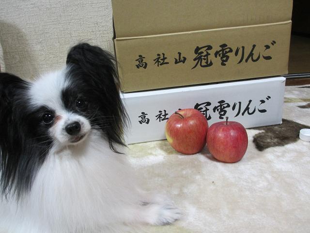 長野・リンゴ