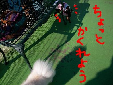 UNI_2270.jpg