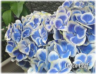gac_20110518102038.jpg