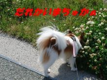 アタシんちの男子-お散歩