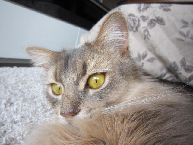リリ姫です^^