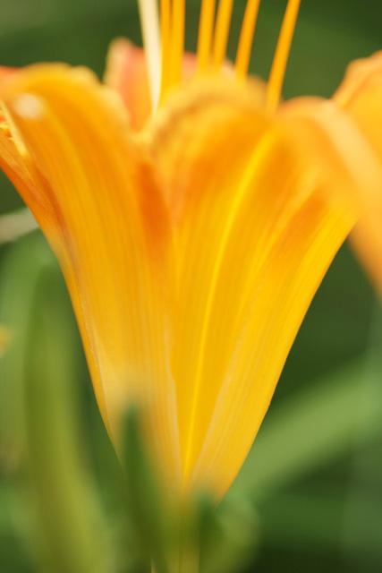 近所の花3