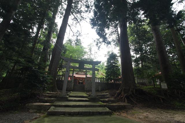 宇佐八幡宮のスギ巨樹群1