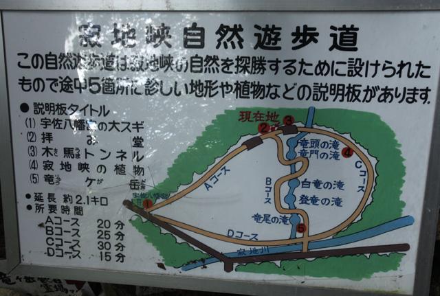宇佐八幡宮のスギ巨樹群