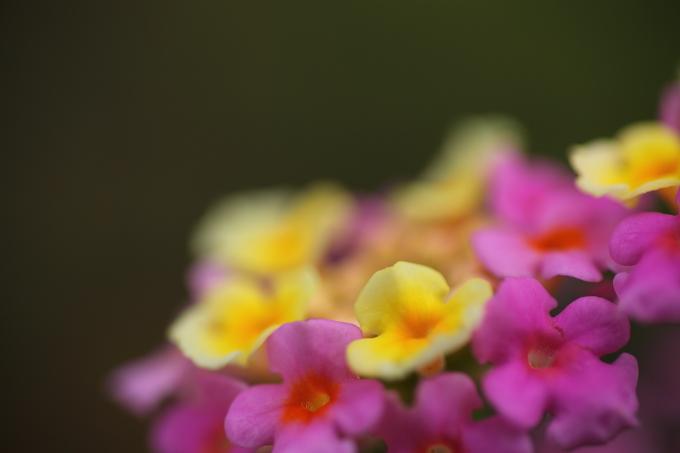 散歩中の見つけた花1