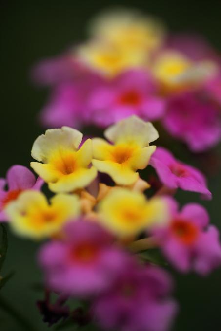 散歩中の見つけた花2