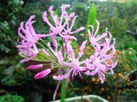 2009.12.4 庭の花1
