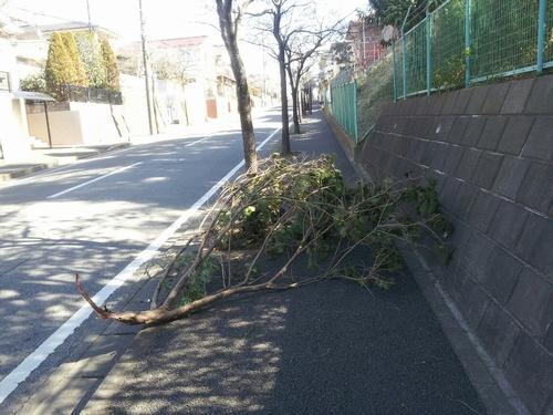 歩道の木 緑と花の課