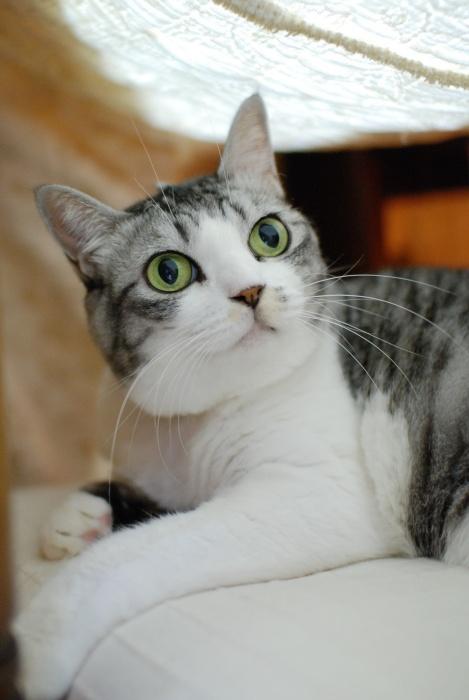 こたつ猫2