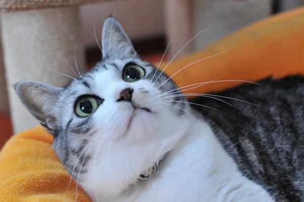 猫のひげ1