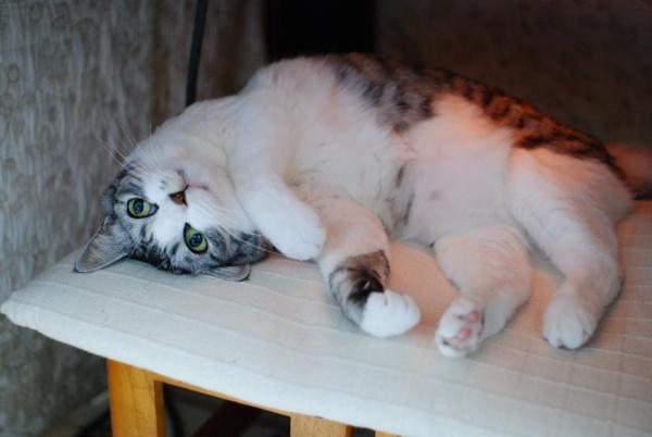 こたつ猫3