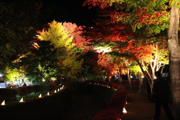 20121112_01_momijikairou.jpg