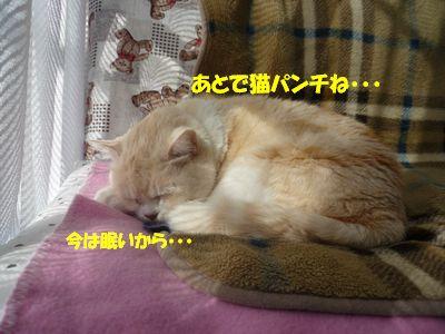 あとで猫パンチね・・・今は眠いから・・・