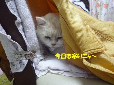 今日も寒いニャ~