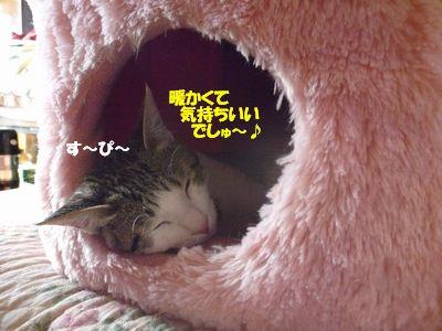 暖かくて気持ちいいでしゅ~♪
