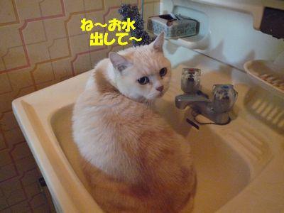 ね~お水だして~