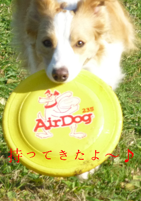 秋が瀬3ー1(1)