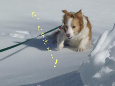 雪に埋もれて(1)