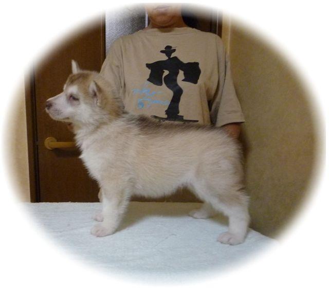 misa子犬 039