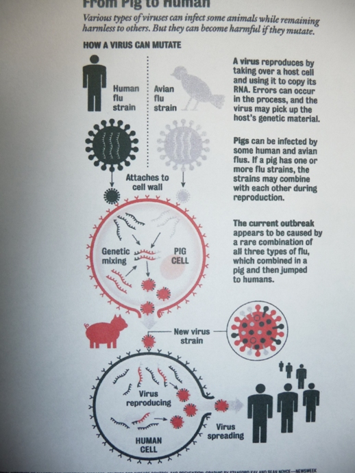 新型インフル感染図式