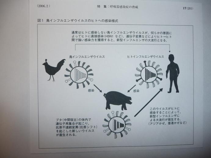 図1新型インフルエンザウイルスのヒトへの感染図式(『最新医学』)