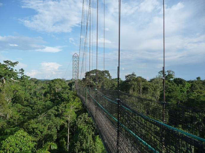 熱帯雨林の天空を渡るスカイスロープ