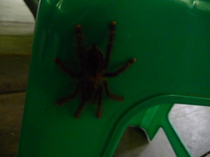 座ろうとしたら蜘蛛が・・・動揺!!!