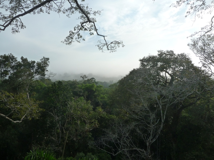 ジャングルの地平