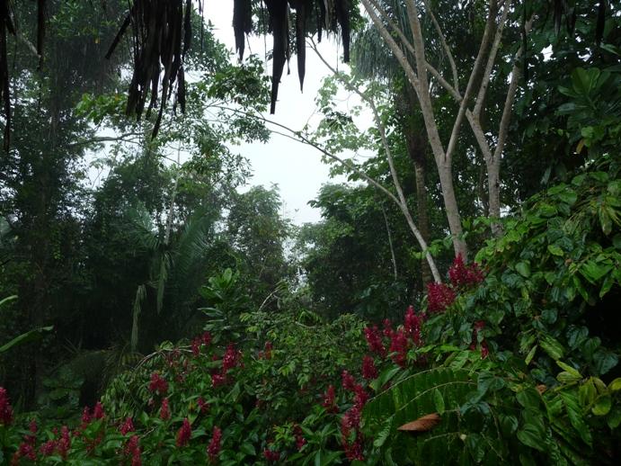 うっそうと茂るジャングル