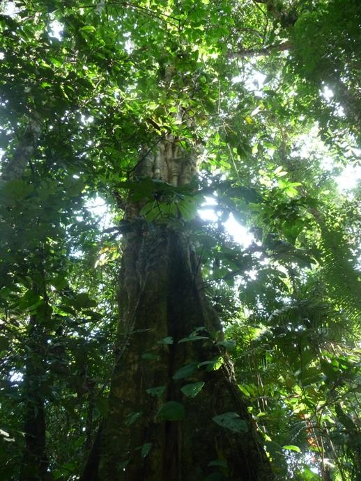 空を覆う熱帯雨林