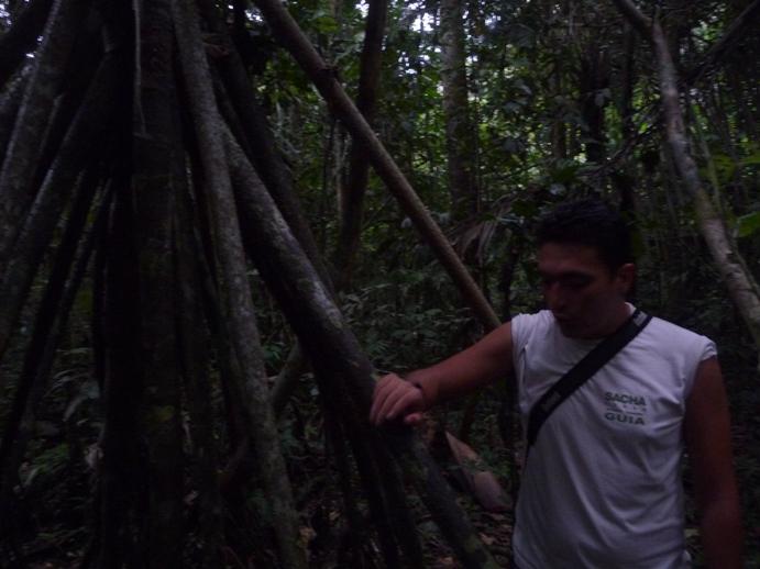 動く木(walking tree)