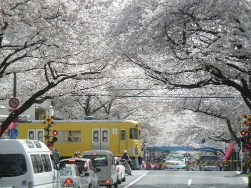 西武新宿線新井薬師~沼袋間(2012年4月10日)