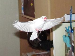 fly002.jpg
