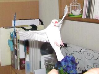 fly003.jpg