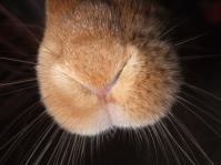 メイの鼻3