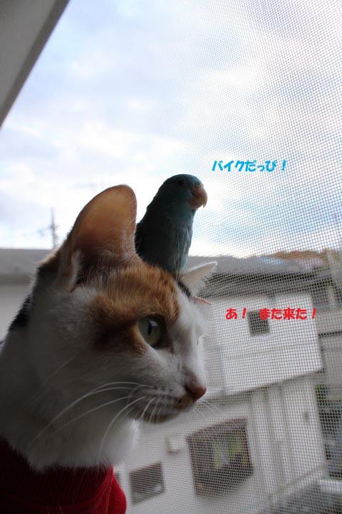 IMG_7988のコピー