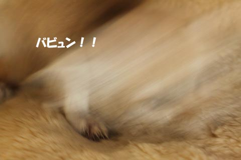 IMG_9155のコピー
