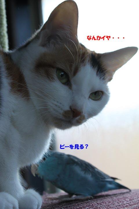 IMG_8553のコピー