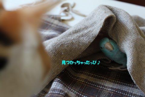 IMG_2720のコピー