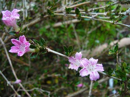 小さい木の花