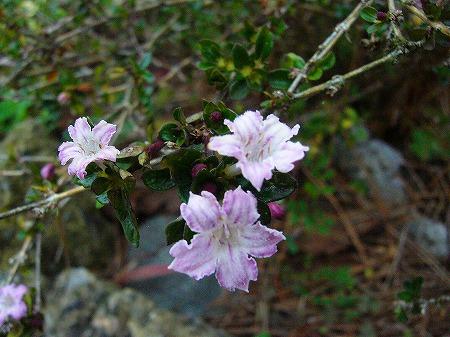 小さい木の花2
