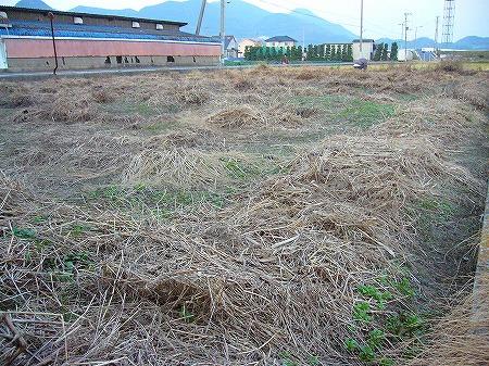 オノ地の草抜き2
